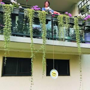 Winnaars van balkonieren bekend, groen op grote hoogte