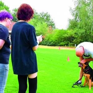Jonge honden op examen